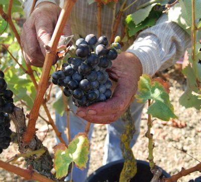 Adega Cooperativa de Arruda dos Vinhos