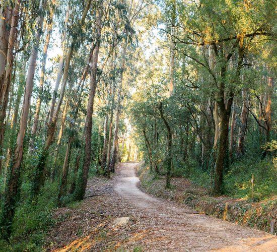 Parque Municipal Cabeço de Montachique